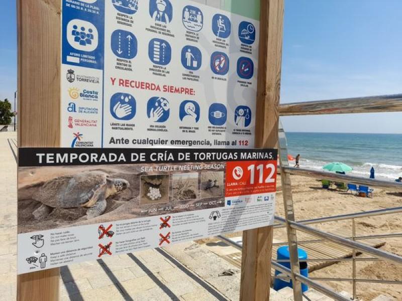 Protección de las tortugas marinas que anidan en las playas de Torrevieja